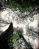 drzewna zima sezonu niebo Thailand obraz stock