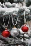 drzewne błękitny futerkowe czerwone srebrzyste sfery Obraz Royalty Free