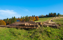 Drzewne bele Fotografia Stock