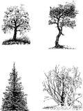 drzewne czarny sylwetki Zdjęcia Royalty Free