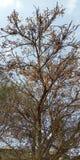 Drzewne i małe owoc zdjęcie royalty free