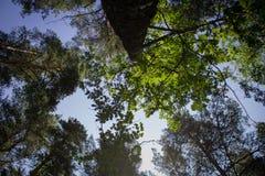 Drzewne korony fotografia royalty free