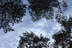 Drzewne korony Obraz Stock