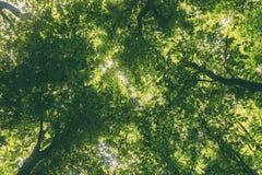 Drzewne korony Zdjęcia Stock