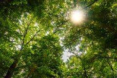 Drzewne korony Zdjęcia Royalty Free