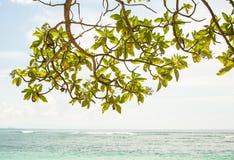 Drzewne liść gałąź z oceanem pokrywają widok w tle Zdjęcia Royalty Free