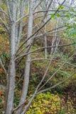 drzewne nagie kończyny zdjęcie stock