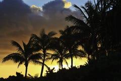 drzewne palmowe sylwetki Obrazy Stock