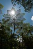 Drzewne paprocie w porcelanie Obraz Royalty Free