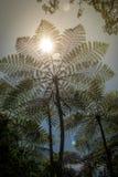 Drzewne paprocie w porcelanie Zdjęcia Stock