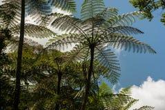 Drzewne paprocie w porcelanie Zdjęcie Stock