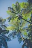 Drzewne paprocie w porcelanie Zdjęcia Royalty Free