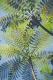 Drzewne paprocie w porcelanie Zdjęcie Royalty Free