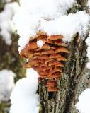 Drzewne pieczarki Obrazy Stock