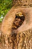 Drzewne pieczarki Fotografia Royalty Free