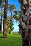 drzewne plażowe palmy Obrazy Royalty Free