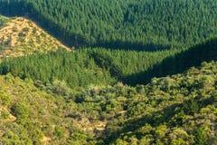 Drzewne plantacje Obraz Royalty Free
