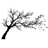 Drzewne sylwetki Obrazy Royalty Free