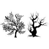 Drzewne sylwetki Zdjęcie Stock