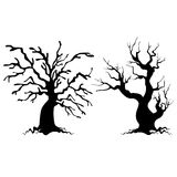Drzewne sylwetki Zdjęcie Royalty Free
