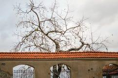 Drzewne sylwetki bez liści za antycznym rocznikiem drylują fen Zdjęcia Stock