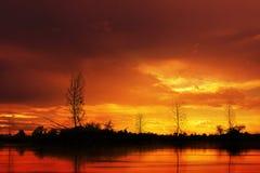 Drzewne sylwetki jeziorem obraz stock