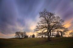 Drzewne sylwetki & ranku niebo Zdjęcia Stock