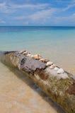 drzewne tło skorupy wakacyjne palmowe Fotografia Stock