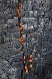 drzewne tekstury Zdjęcie Royalty Free