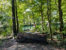 Drzewnego bagażnika siedzenie obok wody w lesie Ginnie Skacze Floryda obrazy stock