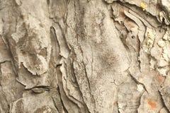 Drzewnego bagażnika tekstury makro- strzał zdjęcie stock