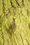 Drzewnego bagażnika tekstury makro- strzał zdjęcia royalty free