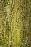 Drzewnego bagażnika tekstury makro- strzał obraz royalty free