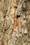 Drzewnego bagażnika tekstury makro- strzał obrazy royalty free