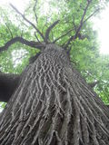 Drzewnego bagażnika wydźwignięcie obrazy stock