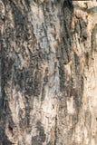 Drzewnego bagażnika zbliżenie Zdjęcia Royalty Free