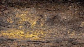 Drzewnego bagażnika powierzchnia obraz stock