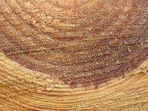 Drzewnego bagażnika przekrój poprzeczny Obrazy Royalty Free