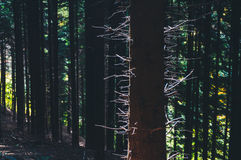 Drzewnego bagażnika sylwetka Fotografia Stock