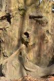 Drzewnego bagażnika tekstura, drzewnej barkentyny tekstura Zdjęcia Royalty Free