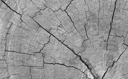Drzewnego fiszorka Powalać tło Zdjęcie Stock