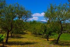 Drzewnego gospodarstwa rolnego zieleni rolnik Zdjęcia Royalty Free