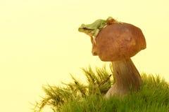 Drzewnej żaby Hyla arborea na pieczarce, borowik Obraz Royalty Free