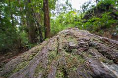 Drzewnej barkentyny drewno z zielonym mech na nim szeroki kąt i tekstura obraz royalty free