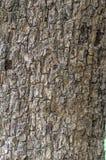 Drzewnej barkentyny grunge tekstura zdjęcie stock