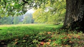 Drzewnej barkentyny I zieleni pole obraz stock