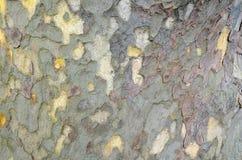Drzewnej barkentyny kolorowa tekstura z bliska Natury background/tekstura obraz stock