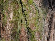 drzewnej barkentyny mech tło fotografia royalty free