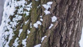 Drzewnej barkentyny śnieg Obraz Stock