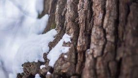 Drzewnej barkentyny śnieg Fotografia Stock